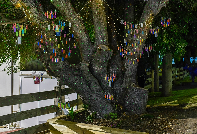 Tree of Dreams Public Lighting Ceremony